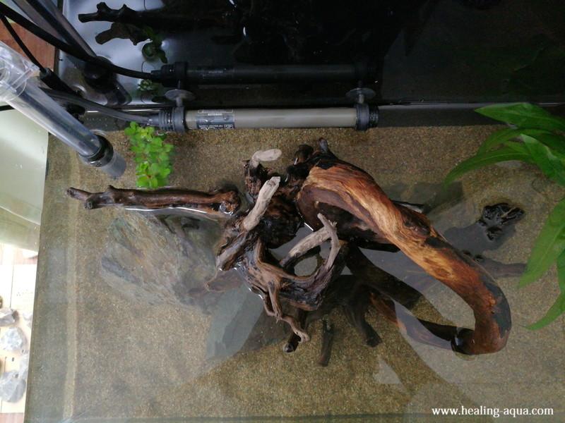 流木の樹皮が剥がれる失敗談-7