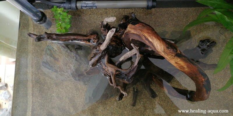 流木の樹皮が剥がれる失敗談
