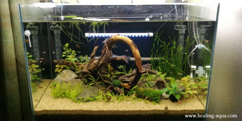 熱帯魚導入レイアウト完成