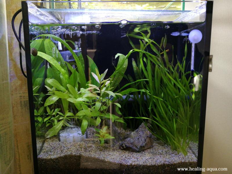 水槽照明テトラ LEDスマートライト LED-SL点灯