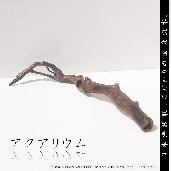 流木アク抜き自然流木Lサイズ-1