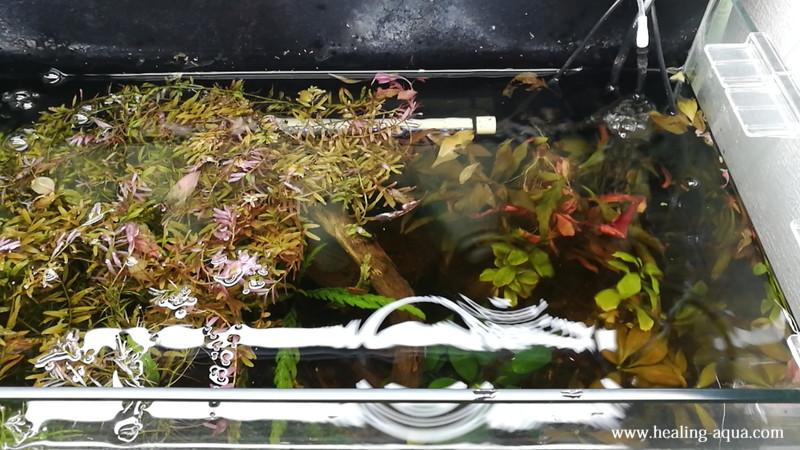 60cm水槽の左側