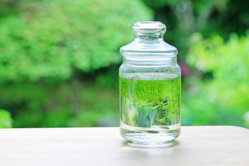購入経験のある水槽用品レビュー