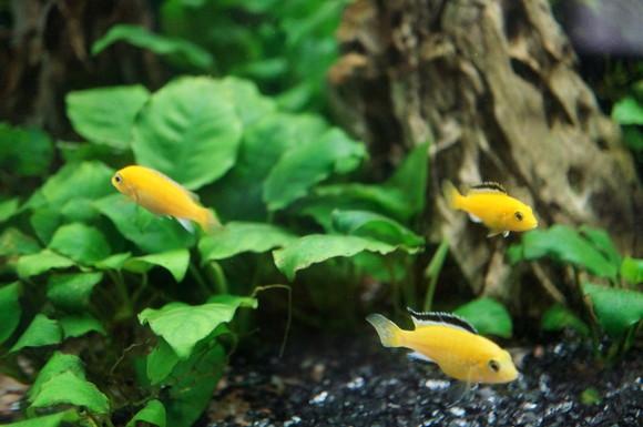 熱帯魚・エビ達のエサ(餌)レビュー