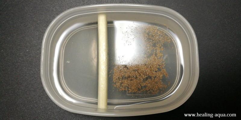 小さい容器でブラインシュリンプを孵化さす