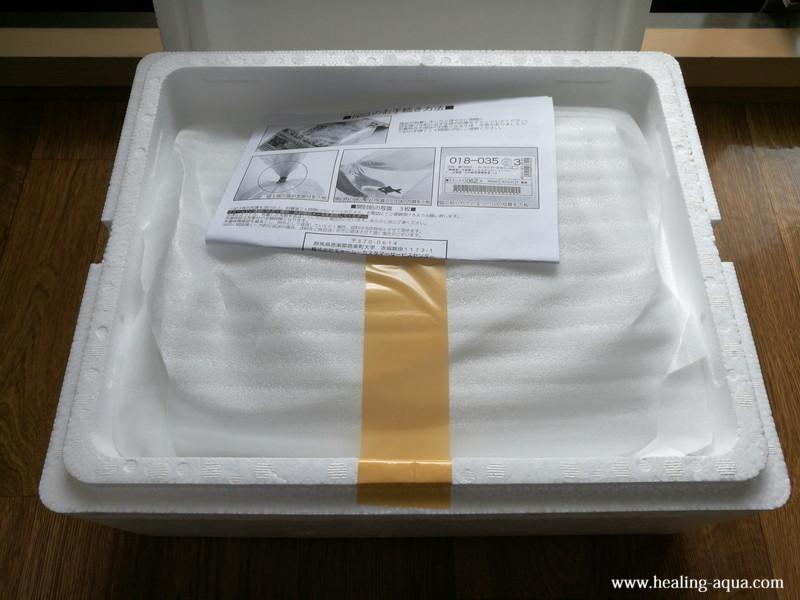 幹之メダカの入った発泡スチロールの箱