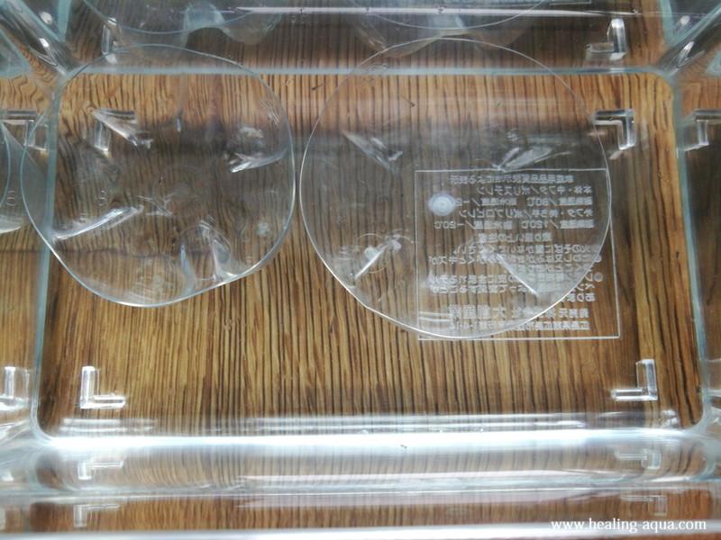 幹之メダカ、スーパー強光~鉄仮面~孵化した稚魚10匹