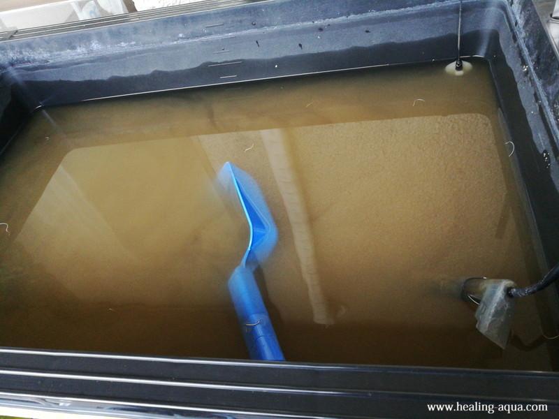トロ舟プラ箱L60水槽の汚れた水