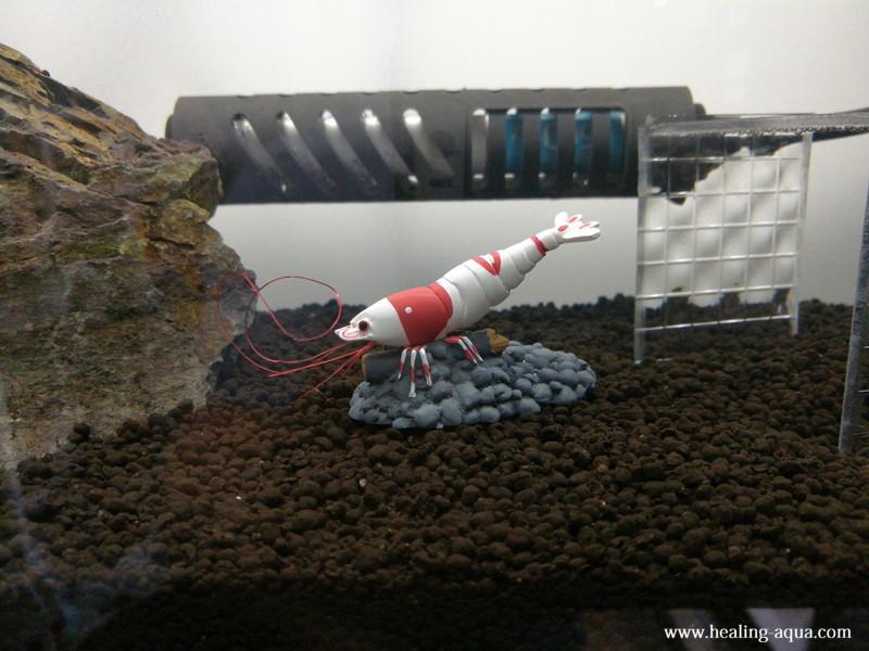 水槽内のレッド(赤白)ビーシュリンプ進入禁止フィギュア