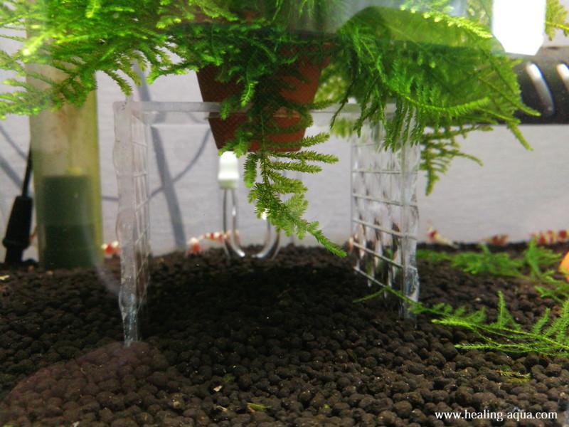 製作したモス花壇の下部を撮影水槽右側