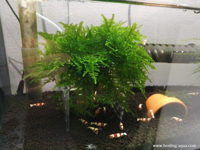 完成したモス花壇を上から撮影水槽右側