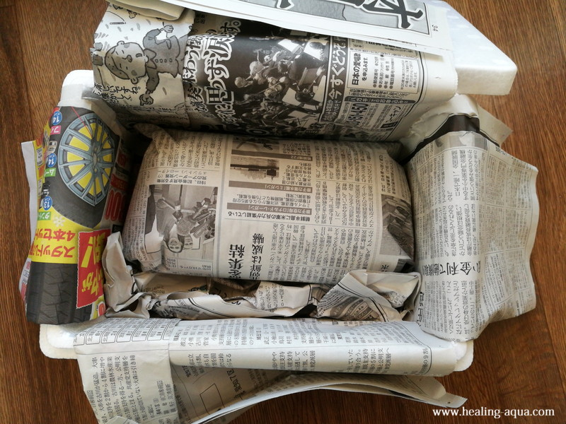 新聞紙に包まれたレッド(赤白)ビーシュリンプ