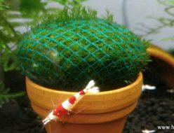 テラコッタの鉢の上のウォーターフェザーボール