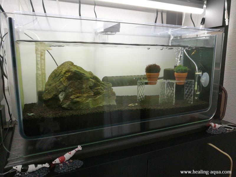 ブラックシャドーシュリンプモスラを導入したアーク水槽