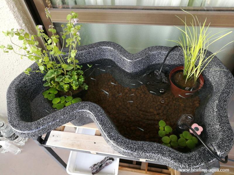 インスタント・ビオトープLOWタイプ寄せ植えをなごみ池へ配置