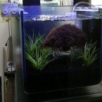 ミナミヌマエビ専用水槽コトブキ工芸アーク250CFセット