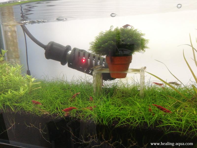 植栽31日目水槽全体のヘアーグラスショート