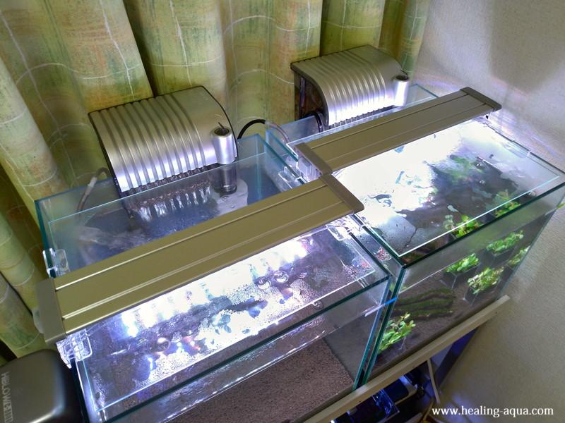 コトブキ工芸フラット(FLAT)LED300を水槽へ設置