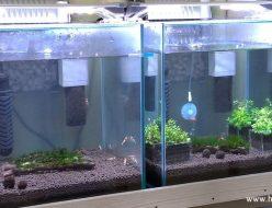 新水槽30cmキューブ水槽2台へ生体導入