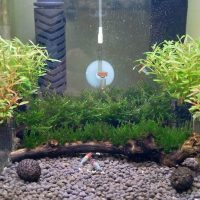 30cmキューブ水槽[1]・[2]の水草をトリミング