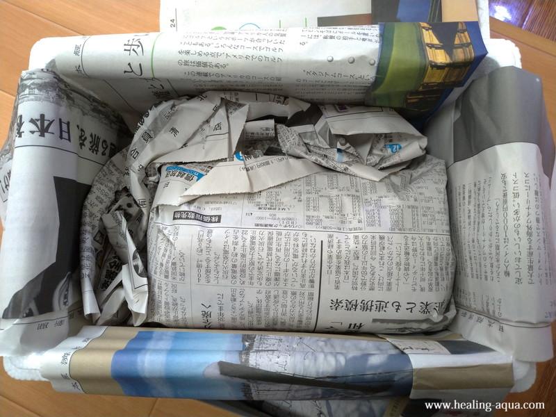 2019年3月新聞紙に包まれたレッドビーシュリンプ22匹